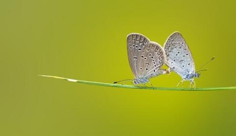 Butterfly Vs. Fate